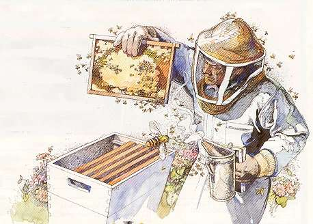 Purdue Extension – Ohio County – Offering Two Free Beekeeping Classes