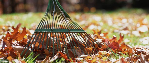 FALL LEAF PICK-UP BEGINS OCT. 20TH