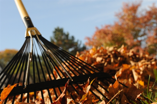 Friday, Dec. 4th Last Day For Leaf Pickup